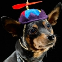 Dog Clothing  -  Why Its So Important to Dress Your Dog