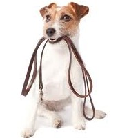 Dog Collar Vs Dog Harness: Which is Better?