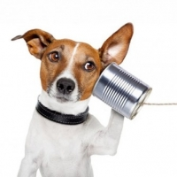 Dog Communication – All they Lack is Speech