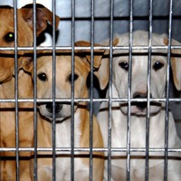 Dog Crates Are Prisons  -  Do You Send Your Pet To Jail?