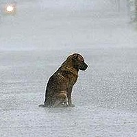 Dog Owner\'s With The Perseverence Of Mail Men