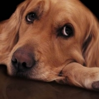 Dog Separation Anxiety And Prevention