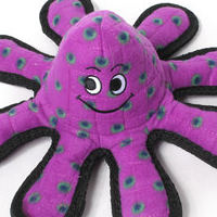 Dog Toys That Entertain And Last