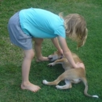 Dog Training   -   Start With The Kids!