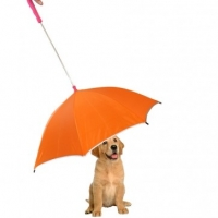 Dog Umbrellas And Other Important Dog Accessories