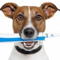 Dog's Dental Care: What's Growing In Your Dog's Mouth?