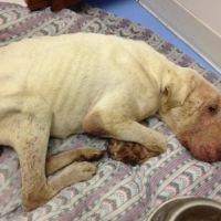 Dog\'s Rescue From Starvation Inspires Fundraiser