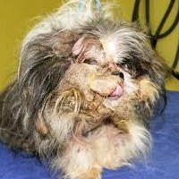 Don\'t Put Off Grooming Due to Money!