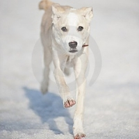 Fear Of Dogs,the Five Steps to Conquering Your Fears