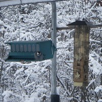 Feeders for Birds