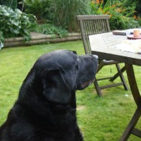 Feeding Tips For Dogs   -   The Right Way to Feed A Dog