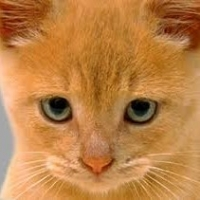Feline Illnesses And Symptoms: Urinary Tract Infections