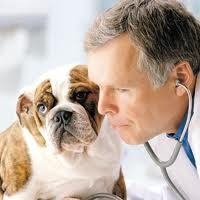 Flea/tick Prevention on Your Canine