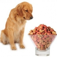 Foods You Shouldn\'t Feed Your Dogs?