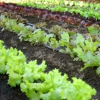 Gardening on A Budget  -  How to Design A Garden on A Budget