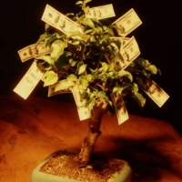 Growing Your Very Own Money Tree