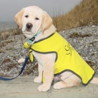 Guide Dog Attacks Are Increasing