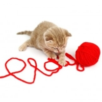 Health Benefits Of Playing With Your Cat