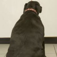 Health Problems  -  Obese Dog