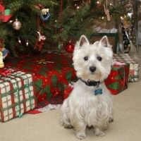 Holiday Gift Giving for Your Friends Pets
