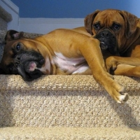 Home Pet Sitting For Your Dog