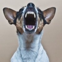 How Safe Is Your Family And Friends From Your Ability To Prevent Dog Bitting Problems?