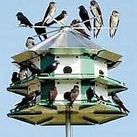 How to Attract Purple Martins