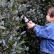 How to Avoid Hedgerow Woes