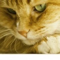 How To Discipline a Cat Without Any Upset