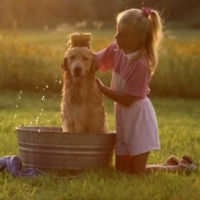How To Find The Perfect Dog Shampoo For Your Pet Companion