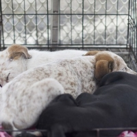 How To Help The Overpopulation Problem Of Dog Shelters In Atlanta   -   One Dog At A Time