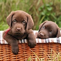 How To Housebreak Your Puppy Using These Six Easy Steps