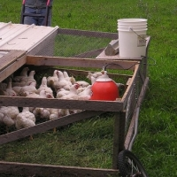 How to Keep Chickens - Chicken Coops