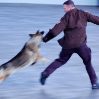 How To Know Triggers For Dog Aggression  -  dog Behavior Problems In Atlanta