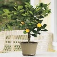 How to Plant Fruit Trees From Seeds In Fruit