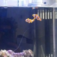How to Properly Maintain Your Saltwater Aquarium