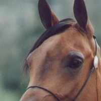 How To Purchase A Horse - The First Call