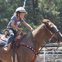 How to Purchase A Horse - The Mind Set