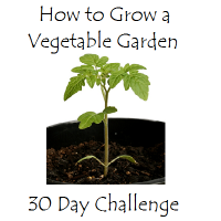 How To Start A Vegetable Garden  -  30 Day Challenge  -  Making A Mini Greenhouse