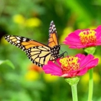 How To Start A Vegetable Garden  -  30 Day Challenge  -  The Great Pollinators