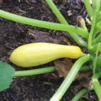 How to Start A Vegetable Garden  -  Update