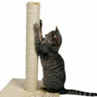 How To Stop Your Cat Scratching Furniture