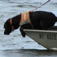 How to Train a Dog for Search and Rescue Work