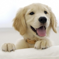 In Home Dog Training - Basic Steps To Get Started Training Your Dog
