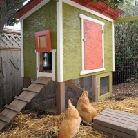 Inside Chicken Coops