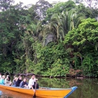 Interesting Facts About Rainforests