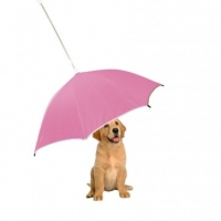 Interesting Tips And Essential Dog Accessories for Your First Pet