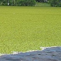 Invasion Species Endanger US Lakes And Streams