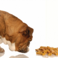 Is Hypoallergenic Dog Food Really Good for Your Dog?