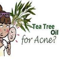 Is Tea Tree Oil Good For Acne  -  Good Home Acne Remedies Include It
